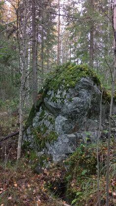 Repokallio, Joensuu, Finland. A tree growing out of a rock. Talk about a tough life.