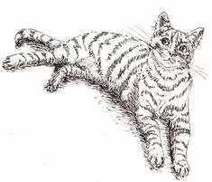 How to Draw a Cat Final Stage