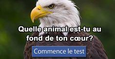 I got:  Quelle animal est-tu au fond de ton cœur?   -  Quelle animal est-tu au fond de ton cœur?