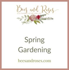 Spring Gardening: flowers for spring garden, vegetables gardening, garden flags, spring garden projects, spring garden layout, gardening containers, early spring gardening, diy gardening, garden party, gardening inspiration, spring garden cleanup, how to plant, gardening seeds, gardening tips, garden scapes. Visit beesandroses.com for your spring gardening needs. Full Sun Flowers, Summer Flowers, Flowers Garden, Flower Pots, Planting Flowers, Cacti Garden, Potted Flowers, Autumn Flowers, Potager Garden