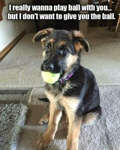 A Dog's Dilemma...
