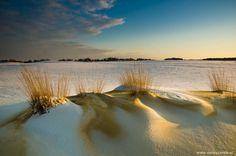 De Drunense duinen - really close to where I used to live