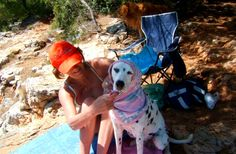 If you are thinking about bringing your pet with you on vacation, here is a list of beaches on which you can enjoy the sun and the sea without. Small Pine Trees, Shade Tent, Dog Shower, Croatia Travel, Enjoying The Sun, Beautiful Dogs, Dog Friends, Places To Travel, Your Pet