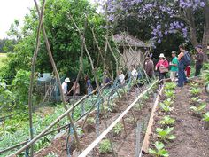 Open Source Permaculture