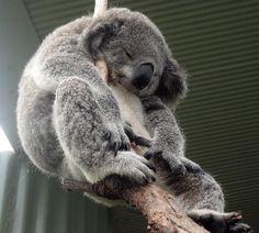 Australia,Sydney-Wildlife and Marine center