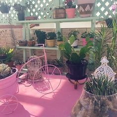 Amanda Mol   Inauguração // Coluna de Jardinagem