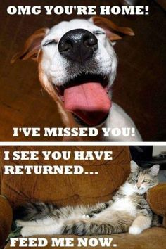 The Difference Between Dogs & Cats, that`s so true!