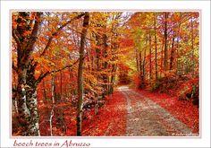 Autumn, by bebbetto