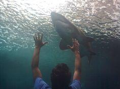 Just Messing With The Shark (Cretaquarium) Random Things, Shark, Fish, People, Travel, Random Stuff, Viajes, Pisces, Destinations