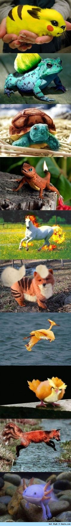 Pokemon in real life ^-^