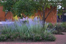 Lee Ann Torrans Gardening in Texas | Texas Perennial Garden – Top Ten Summer Perennials | http://leeanntorrans.com