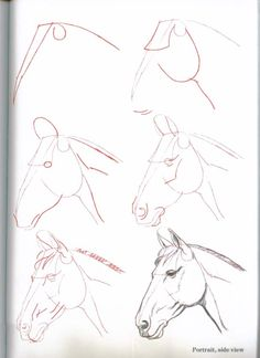 How-To-Draw-Horses - ~*Horse Heaven*~.Lots of ways to draw horses here! Horse Drawings, Animal Drawings, Art Drawings, Horse Head Drawing, Illustration, Horse Art, Horse Horse, Drawing Techniques, Zebras