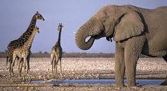 Animales típicos de africa