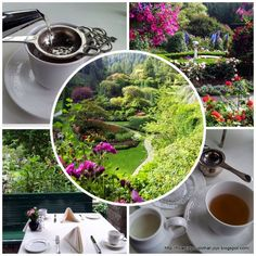 How'd You Do That?: LOVE LETTER TO THE BUTCHART GARDENS & THEIR AFTERNOON TEA! PLUS A GINGER SCONE #RECIPE.