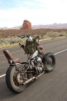 Cross country on a rigid frame/ springer front end Harley = brutal!