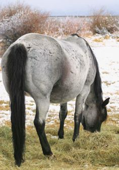 """Pregnant mares are in fact """"eating for two,"""" as they say. Your mare has her own feed requirements, but then you must add to that the requirements for the foal she has on board. Foals in Horse Care Tips, Dog Care Tips, Horses And Dogs, Wild Horses, Pregnant Horse, Horse Feed, Horse Quotes, Aggressive Dog, Horse Pictures"""