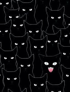 Yato cats, Noragami.