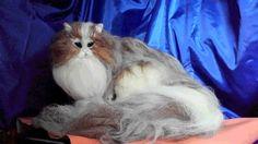 ねこちゃんをご覧いただきまして、誠にありがとうございます☆ 羊毛やアルパカ毛などを使用して、リアル猫 チンチラ ミックスが出来ました♪ 色合いもリアルになるよ... ハンドメイド、手作り、手仕事品の通販・販売・購入ならCreema。