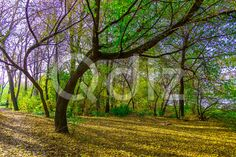 Qdiz Stock Photos | Trees with Green Leaves in Autumn Park,  #autumn #background #branch #colorful #day #environment #fallen #foliage #footpath #golden #grass #green #ground #landscape #leaf #leaves #lush #multicolored #nature #nobody #outdoor #park #path #pathway #road #scenery #season #sky #sunlight #sunny #tranquil #tree #trunk #walkway #way #wood #yellow