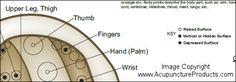 Auricular Ear Acupuncture