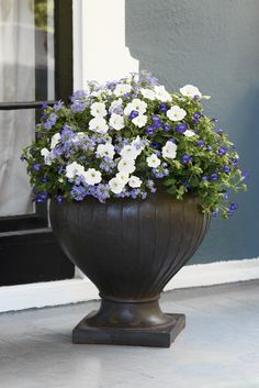 'Mother's Day Bouquet' will work near a doorway with sun or partial sun, and hosts a wide array of purples and white. Quite sweet. http://emfl.us/aELd