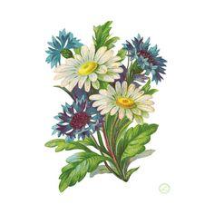 Клип-арт Цветы ❤ liked on Polyvore featuring flowers
