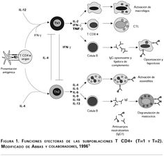 Imunologia - linfócitos