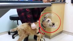 OMG! This Dog's Reaction To Seeing His Family After Eye Surgery Is Priceless – Bring On The Happy Tears!