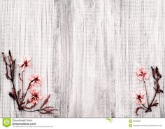 Pretty Dried Rock Rose Flowers On Rustic White Wood Background ...