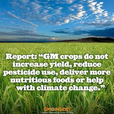 Genetically modified crops and foods are neither safe nor necessary to feed the world, a report shows. Get the full report from Earth Open Source (EOS): http://earthopensource.org/index.php/reports/gmo-myths-and-truths #GMOs #LabelGMOs #food
