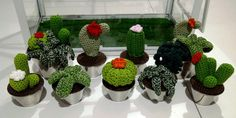 Cactus inmortales