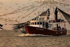 louisiana    shrimp boat returns to Grand Isle, Louisiana covered with birds ...