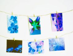 Etsy, Etsy seller, X-Ray photography, floral art postcards, birthday gift, Christmas gift, thank you note, happy birthday note, Christmas photo cards, photo cards, xmas cards, teton parchment, photographic card, blank greeting card
