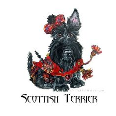 Celtic Scottish Terrier