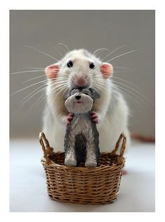 rat with toy dog. Oh my goodness this is too cute!!!!!