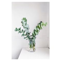 design related with plants Amsterdam - Google Search