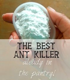 Due to the similar grain size of baking soda and powdered sugar, ants cannot tell the difference! The Baking soda is toxic to ants and will eradicate your problem rather quickly! Household Cleaning Tips, Cleaning Hacks, Household Pests, Cleaning Recipes, Household Cleaners, Cleaning Supplies, Ant Spray, Weed Spray, Diy Pest Control