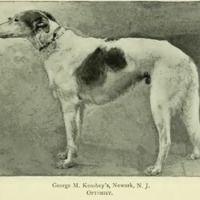 1897 Borzoi 'Optimist' George Keasbey Newark NJ.