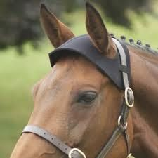 Poll Guard-Neoprene poll guard to protect your horse when travelling.