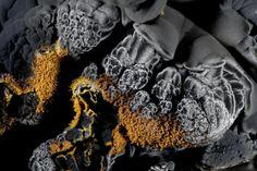 Goethite pyrolusite pit Klara (Clara Mine), Oberwolfach, Baden Württemberg, Germany (Germany) - image width (FOV): 10 mm. Fund and photo: Eddy Van Der Meersche; collection Dirk Van Brande.