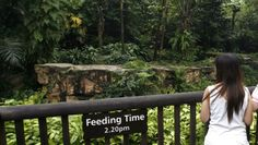 Tiger Always Checked Out Of Local Zoo