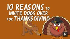 10 Reasons to Invite Dogs Over for Thanksgiving  #thanksgiving   #dogs   #puppies