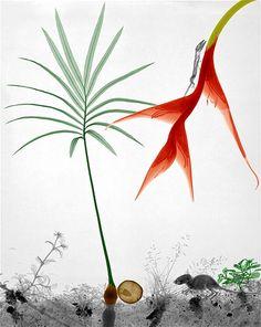 Image: Tropical plants. (© Arie van 't Riet)