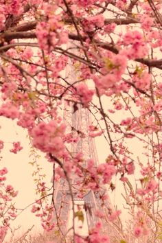 Peach Blossoms in Paris!