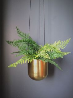 Brass Hanging Planter – Homeplace