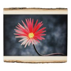 #personalize - #Red Daisy Flower #2 Wood Panel