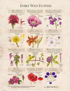 Edible Flowers: Foraging & Feasting's Essential Info + Wondrous Recipes   The Improvised Life   Bloglovin'