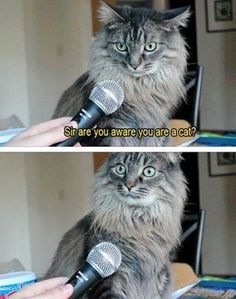memes Hilarious kitty Cats are cute and sometimes unintentionally do stupid funny things, so we have collected some the funniest and most hilarious cat memes and pictures hope you will enjoy em. Funny Animal Photos, Funny Animal Memes, Cat Memes, Funny Cats, Funny Animals, Funny Pictures, Cute Animals, Funny Images, Animal Captions