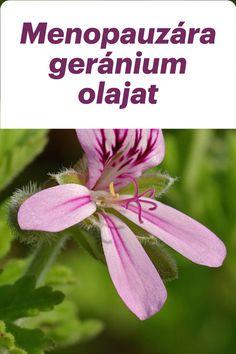 Változókor, menopauza, klimax és ami velejár: hangulat változások, érzelmi stressz stb. Segít a geránium illóolaja! Geraniums, Plants, Plant, Planets