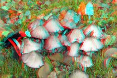 https://flic.kr/p/NfQntd | Fungi Rozenburgpark Rotterdam 3D | anaglyph stereo red/cyan